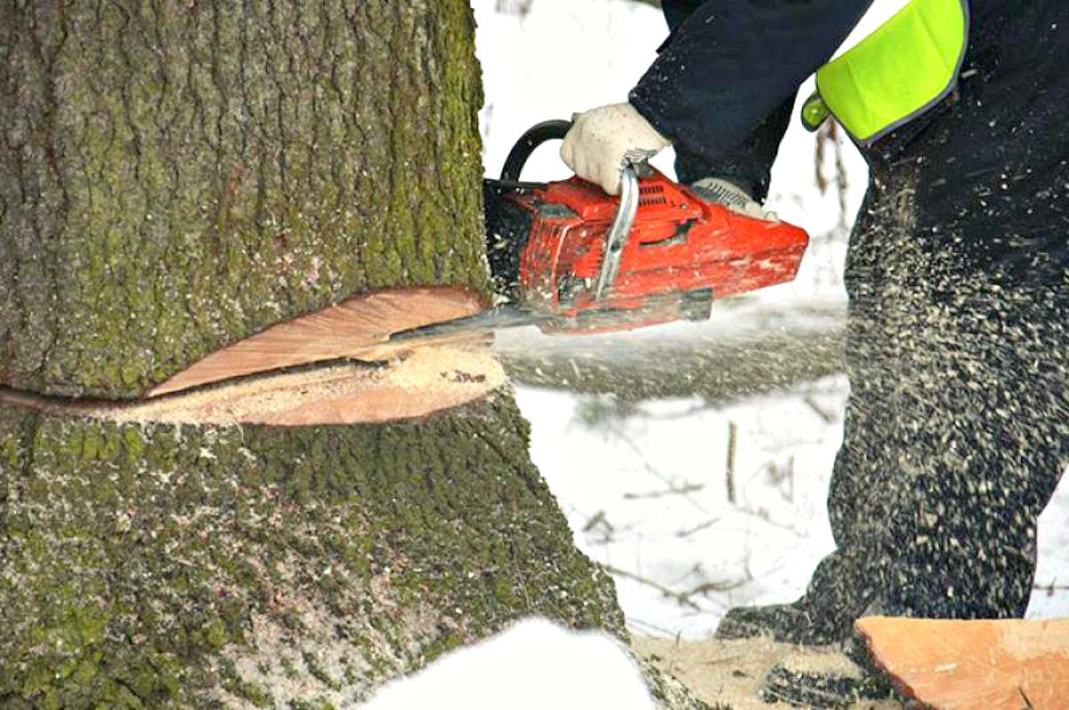 разработки не законная вырубка деревьев в тобольске ОЗНАЧАЕТ